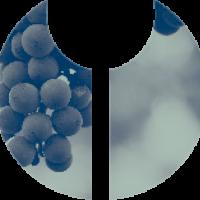 cropped-Joorwine-logo-witte-achtergrond.png